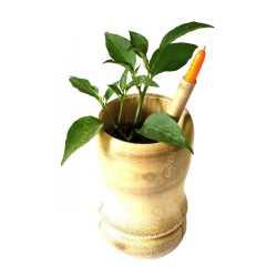 Eco-Seed Pen